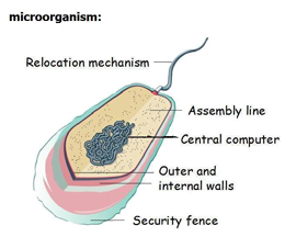 probiotics non pathogenic microorganisms biology essay Classification of unknown bacteria found in soil biology essay  the bacterial isolate did non react to many of the biochemical trials, but was positive for.